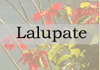 Suchana Suchana Suchana - last post by Lalupate